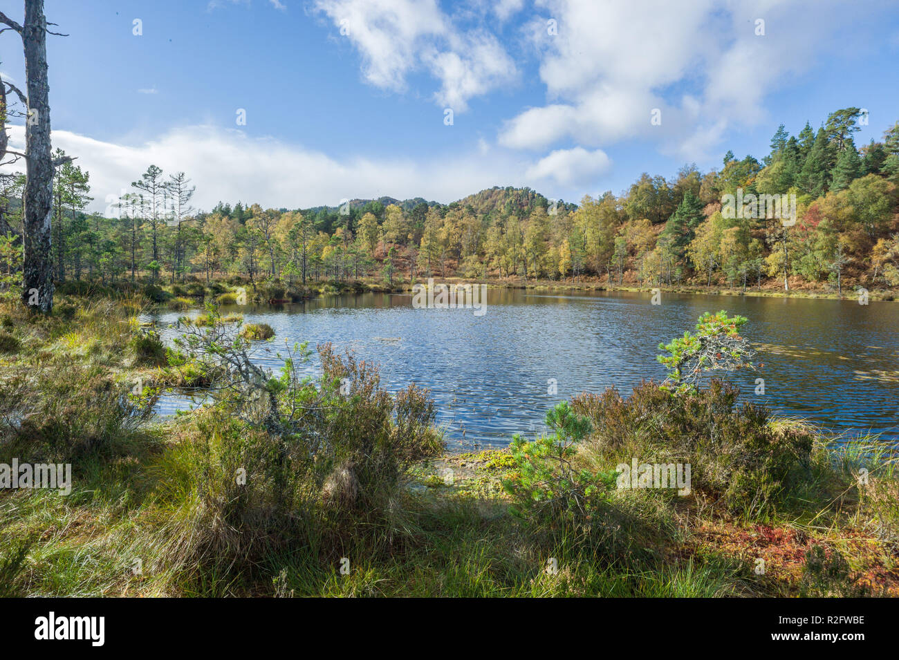 Coire loch on the viewpoint trail in Glen Affric, Highlands, Scotland. - Stock Image
