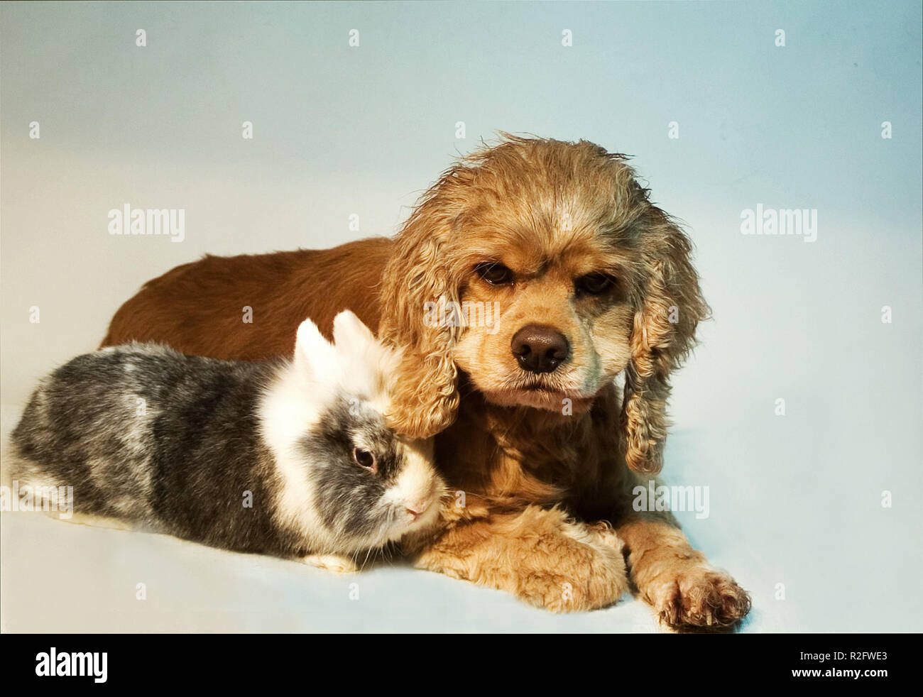 as dog and rabbit ... - Stock Image