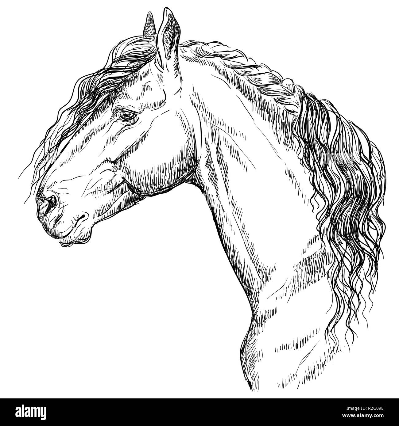 Friesian Horse Portrait Horse Head In Profile In Monochrome Color Isolated On White Background Vector Hand Drawing Illustration Stock Vector Image Art Alamy