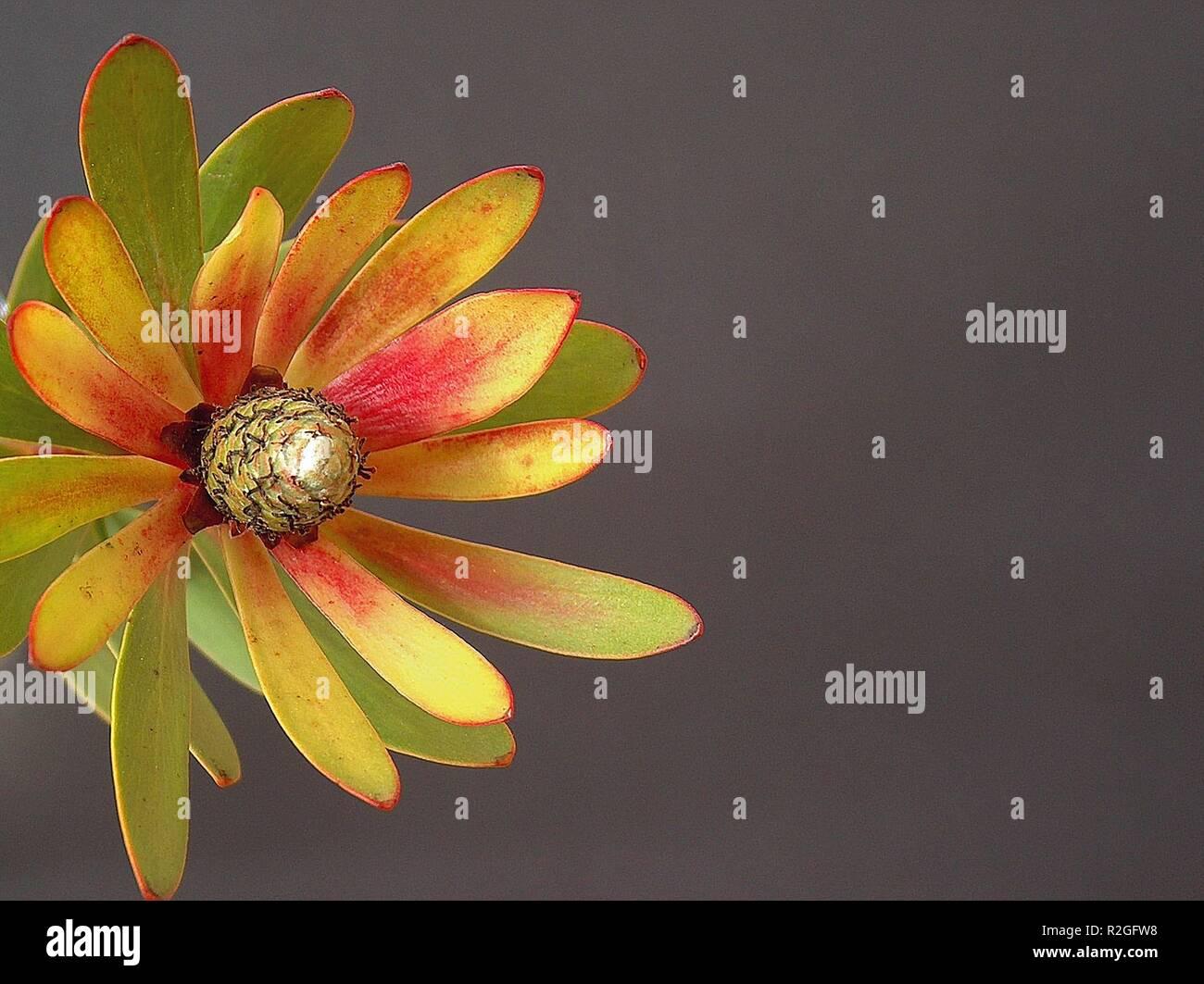blossom - Stock Image