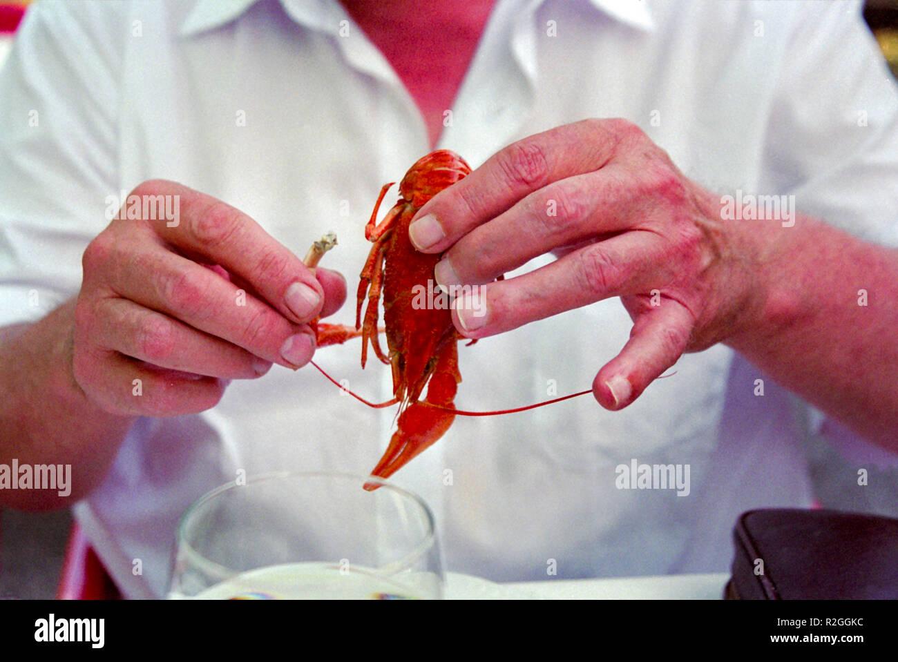 cancer,shellfish - Stock Image