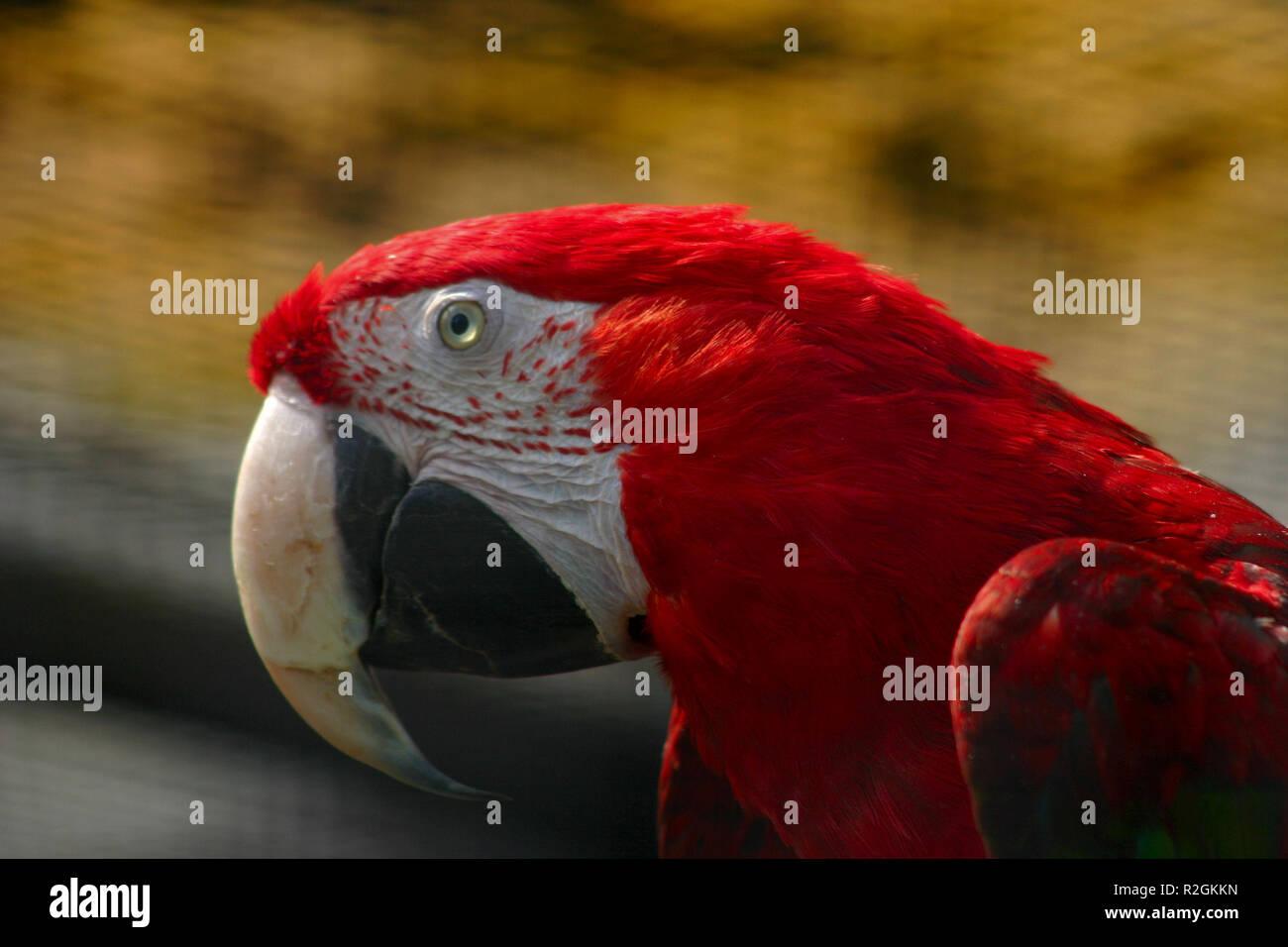Sprachbegabt Stock Photos Sprachbegabt Stock Images Alamy
