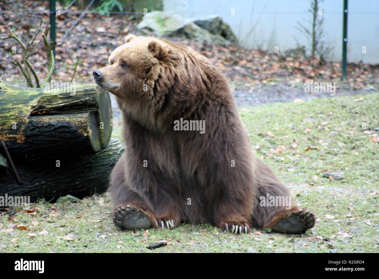 teddy bear? Stock Photo