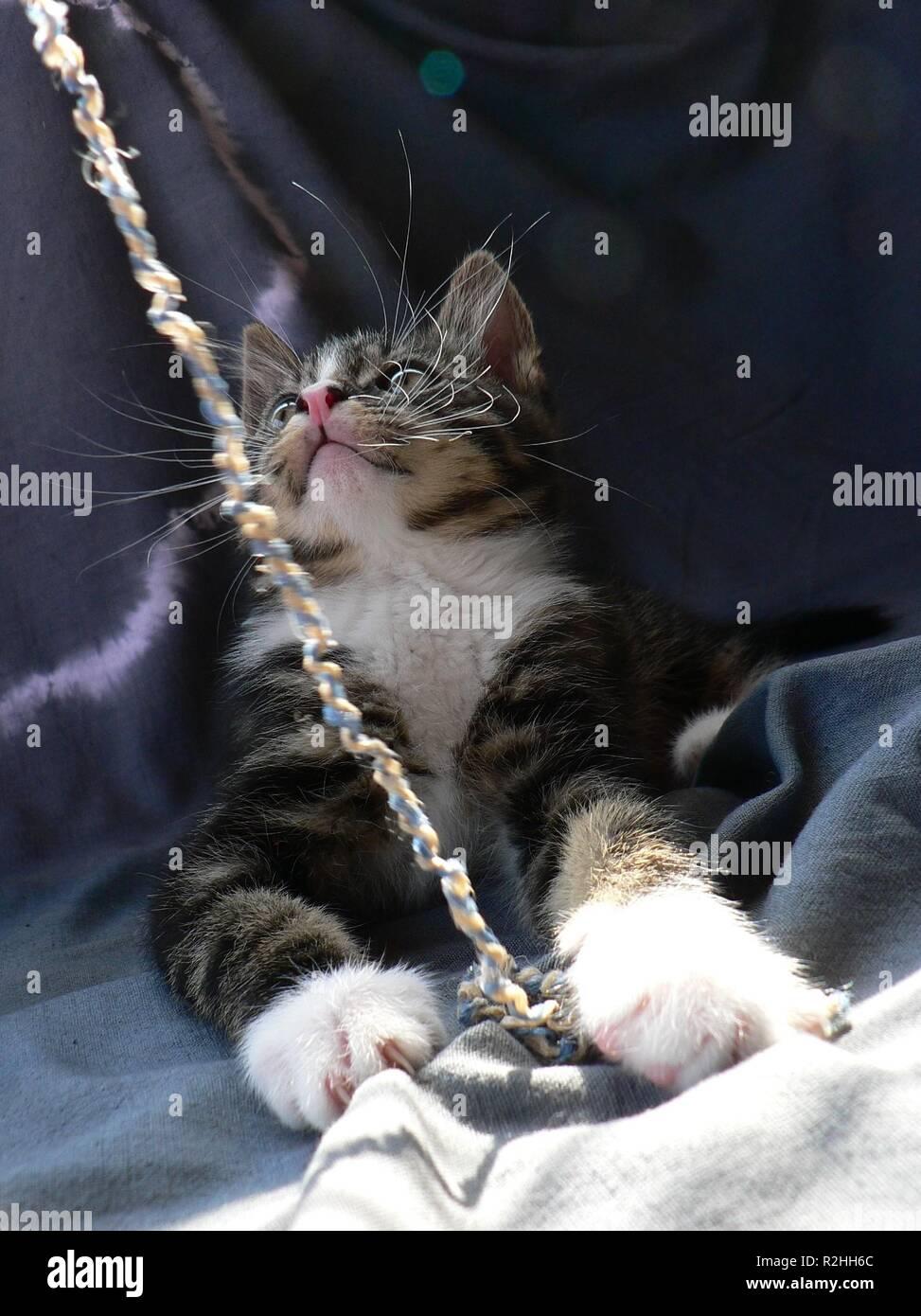 catching the yarn Stock Photo
