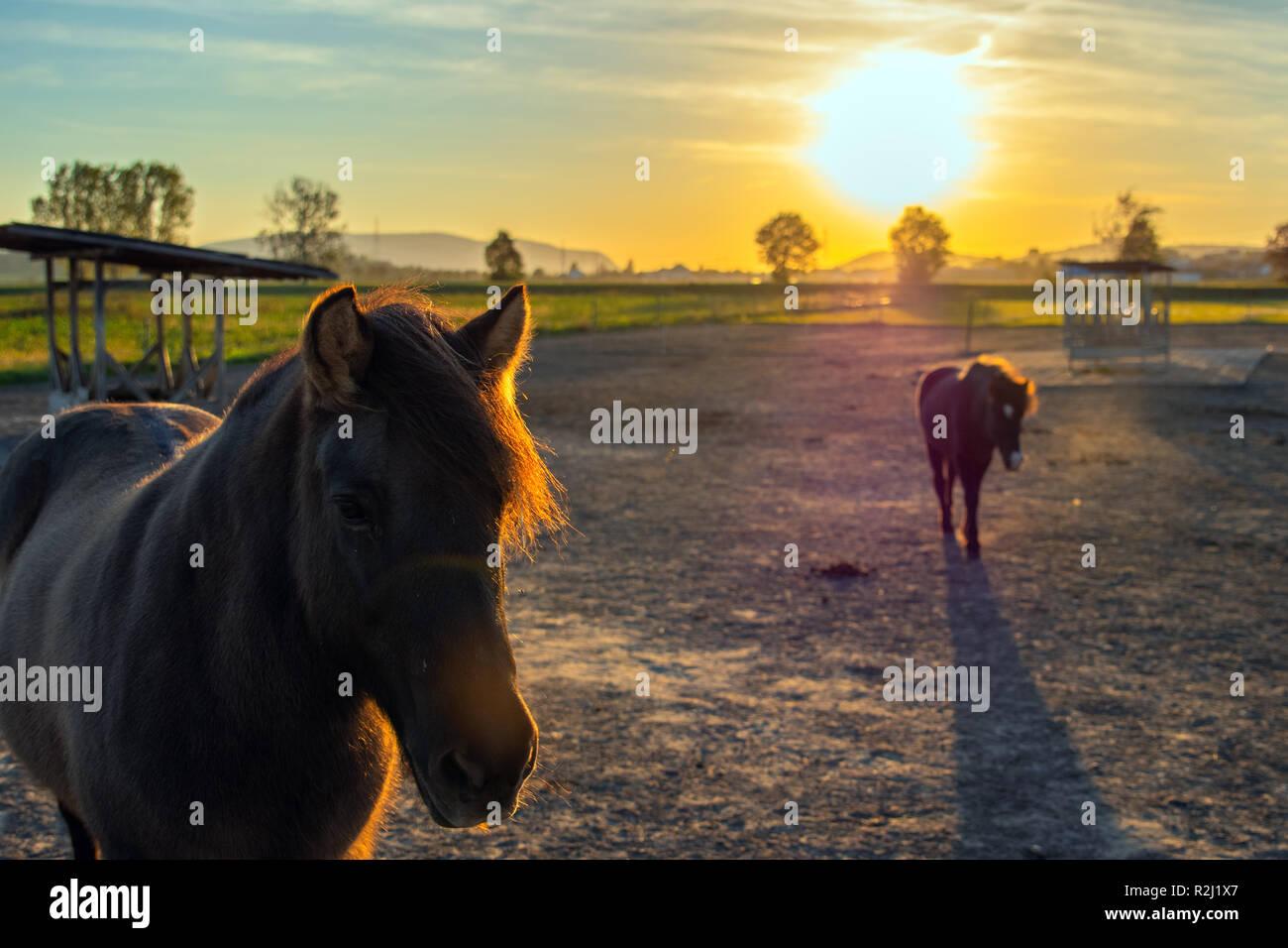Pferde bei Sonnenuntergang - Stock Image