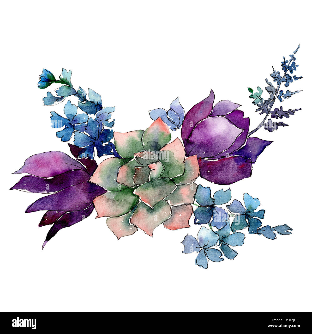 Succulent With Purple And Blue Flowers Isolated Bouquet Illustration Element Watercolor Background Illustration Set Stock Photo Alamy