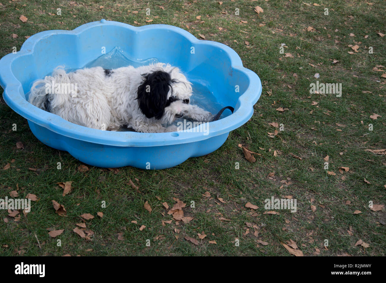 Hackney. London Fields. Dog show - dog having a rest in a paddling pool - Stock Image