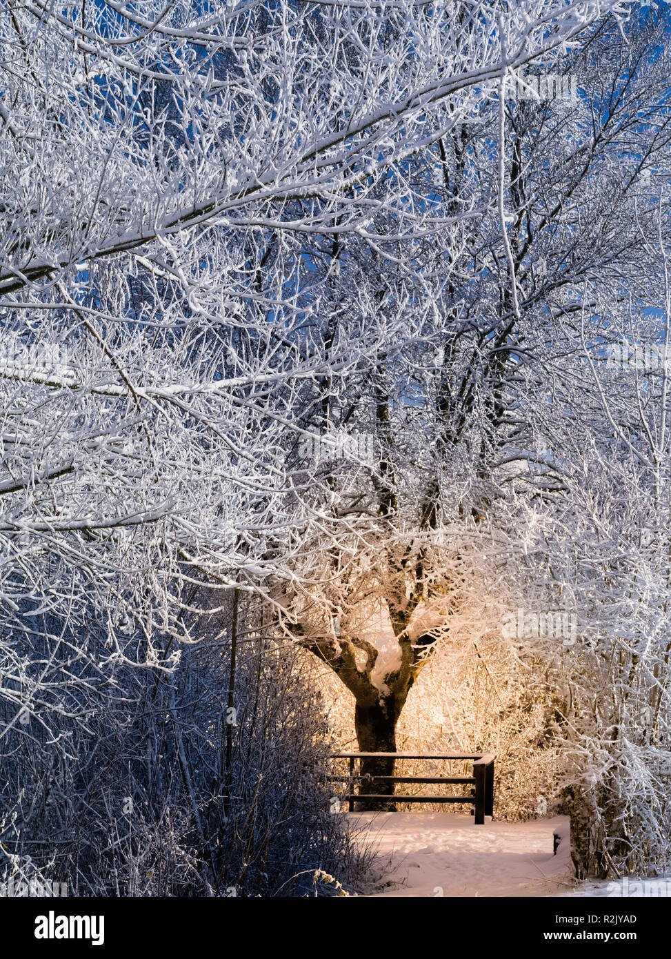 Winter fairytale forest with light sparkle - Stock Image