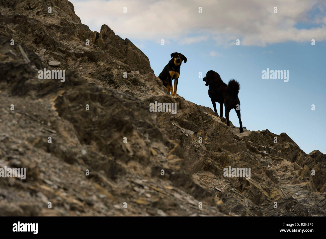 Dogs near the old town of Gyantse Stock Photo