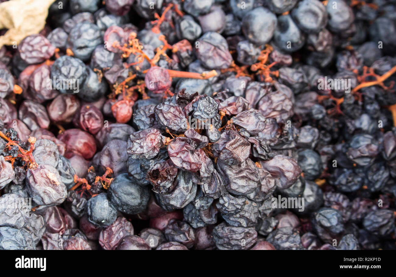 Pile of discarded rotten grapes. Concept of spoiled harvest with copy space. - Stock Image