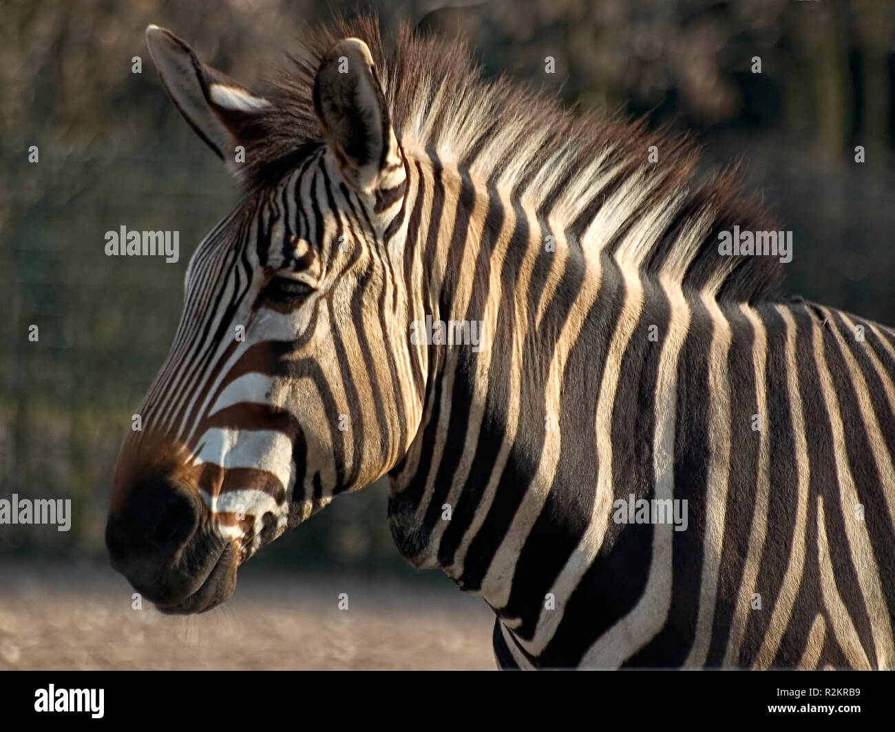 Black Belly Stripe Stock Photos   Black Belly Stripe Stock Images ... 71f6f422b