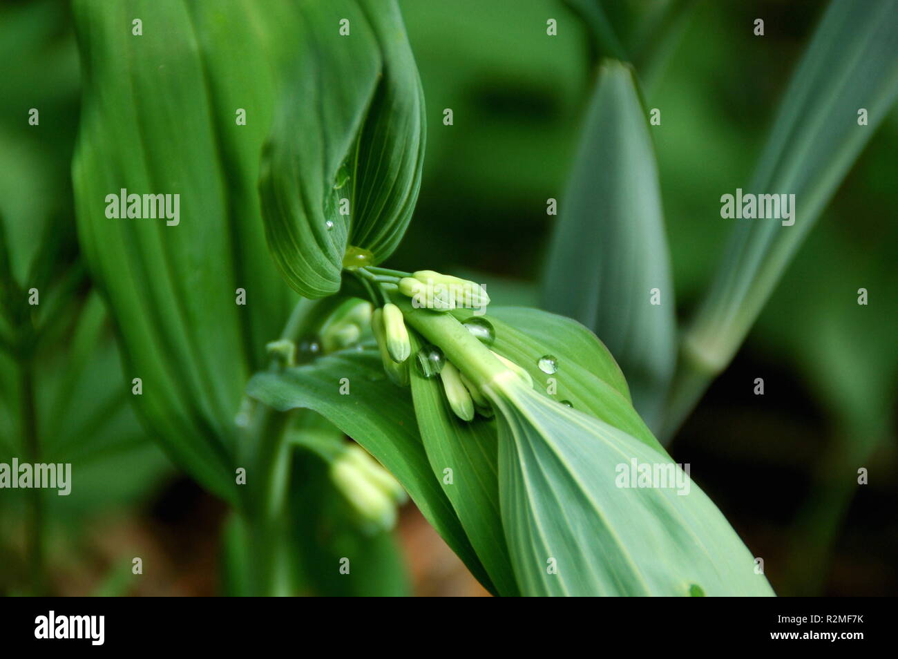 new style 8c253 c58a5 frauenschuh Stock Photo: 225415111 - Alamy