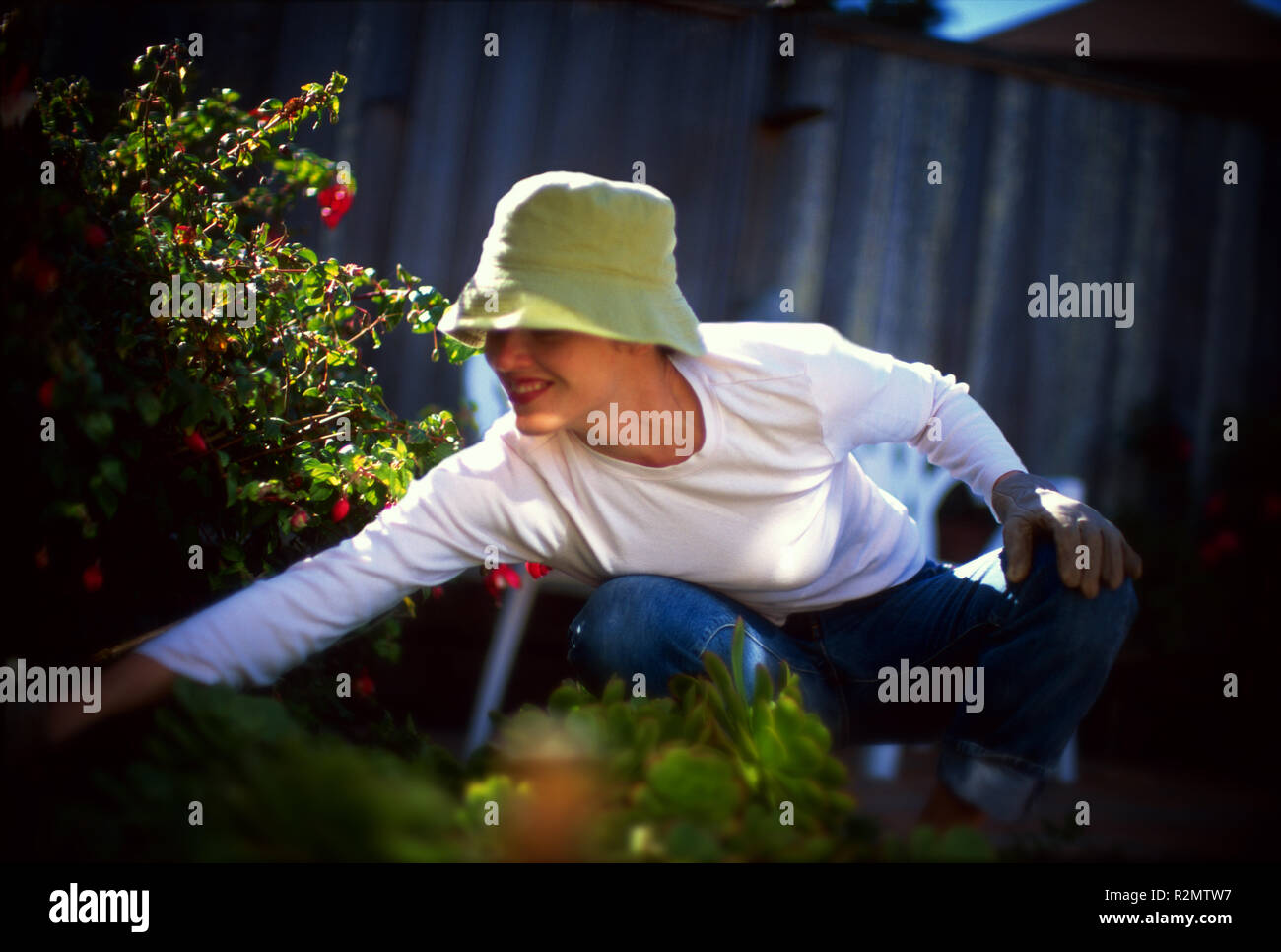 Laurie gardening - Stock Image