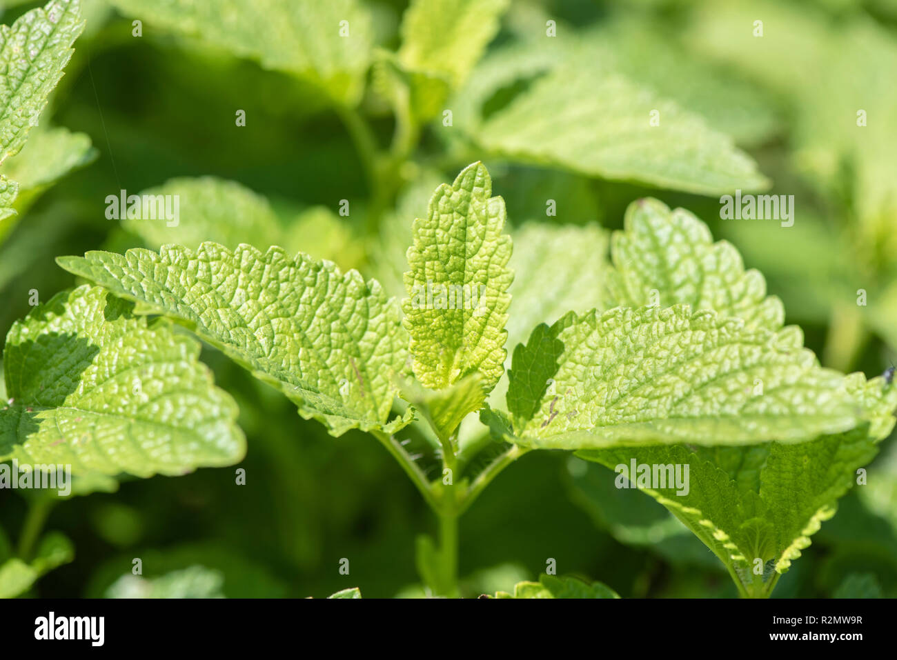 Herbal Medicine Stock Photos & Herbal Medicine Stock Images