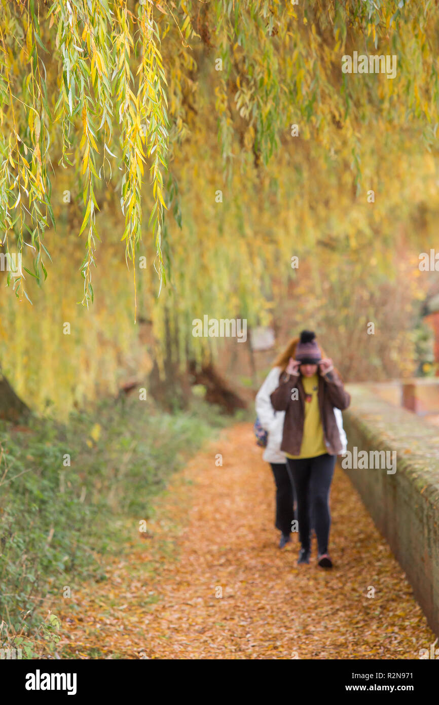 Bewdley, UK. 20th November, 2018. UK weather: with the autumn season well under way, today is definitely a day for woolly hats with bitterly cold temperatures. Walking through the fallen autumn leaves, a girl pulls her hat further down over her head to keep out the chilly weather. Credit: Lee Hudson/Alamy Live News - Stock Image