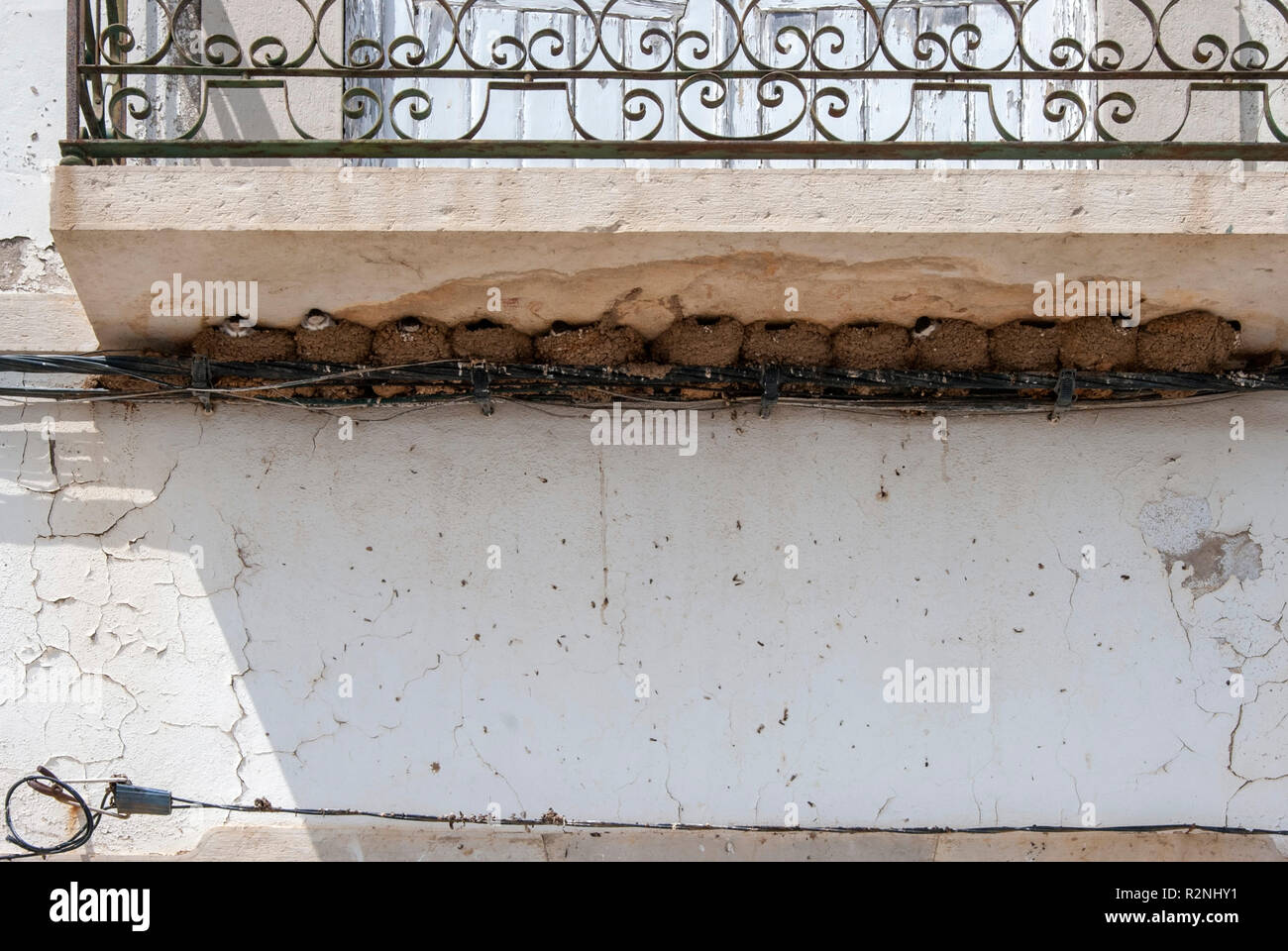 A Row of Twelve Swallow Mud Nests Below a Balcony Tavira Portugal many lots of swallow bird mud nests wedged between the underside of a balcony ledge  - Stock Image