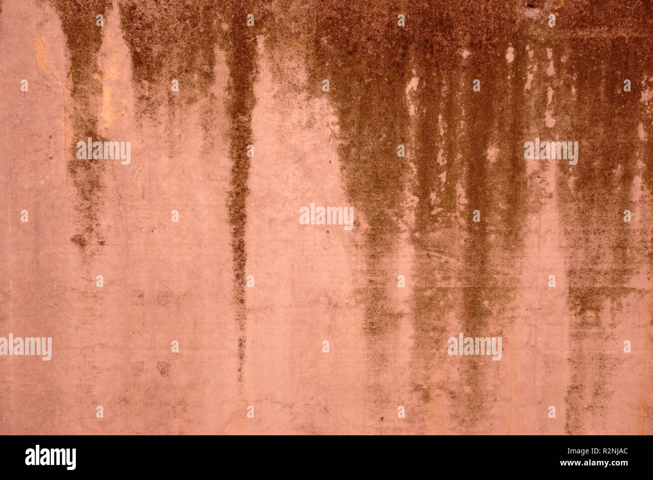 Close-up of green algae and plant remains as well as runny traces of water on the surface of a wall, - Stock Image