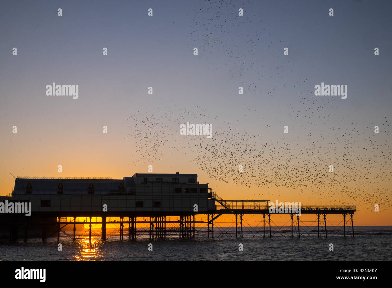 After a glorious sunny blue sky day Aberystwyth was treated to a stunning sunset with starlings murmuration,and,then,roosting,on,under,Royal Pier, - Stock Image