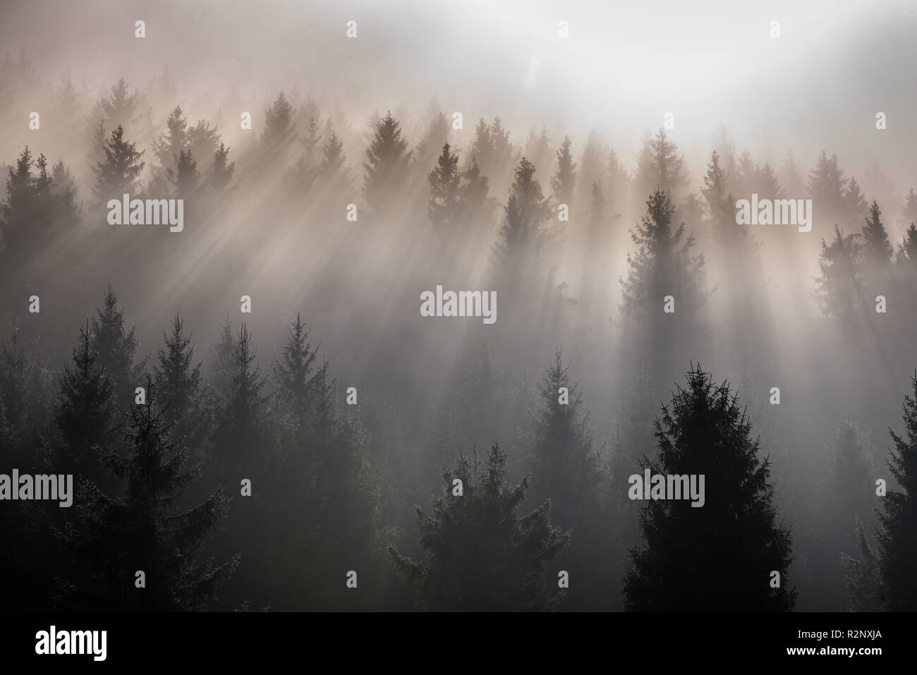 Fog divided by sun rays. Misty morning view in wet mountain area. - Stock Image