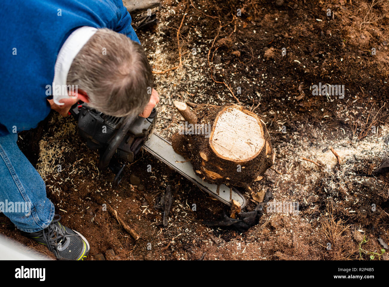 An elderly man cutting out a tree stump in a yard. - Stock Image