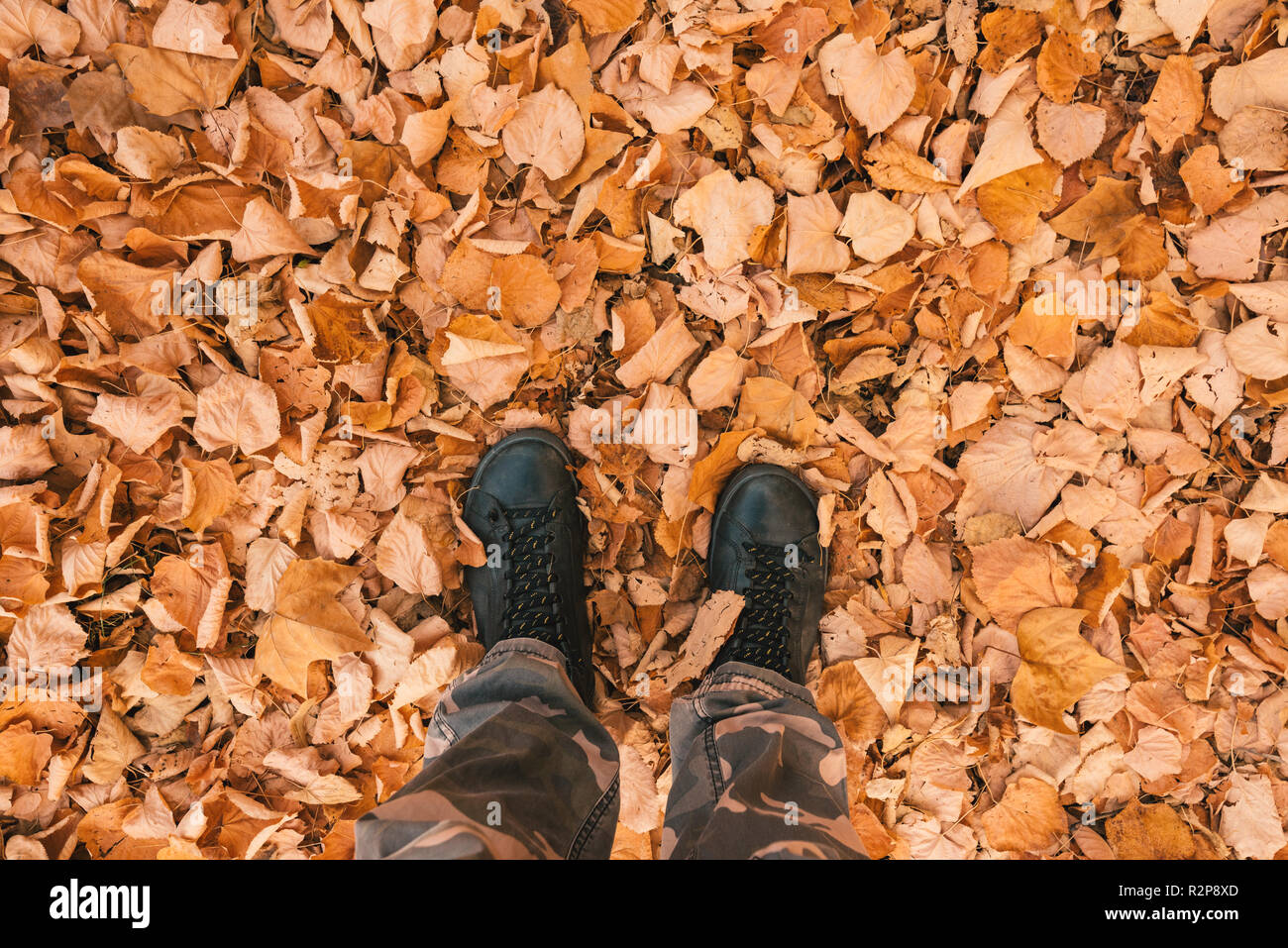 Man standing on heap of dry fallen white birch leaves on cold autumn day - Stock Image