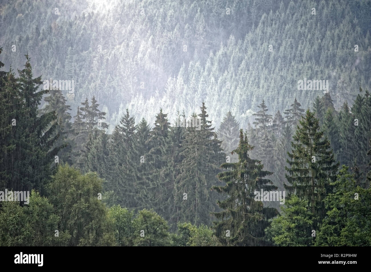 Misty landscape in Brocken,Harz,Germany.Brocken im Nebel und Regen,Harz. Stock Photo