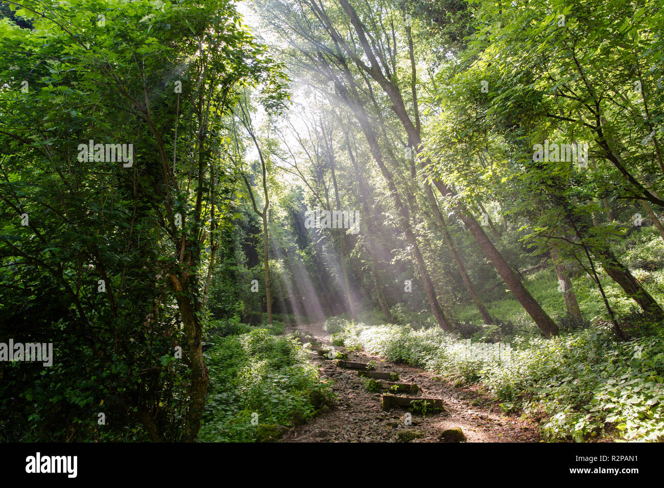 Glistening sunbeams in a forest, lighting a path with stone stairs - Stock Image