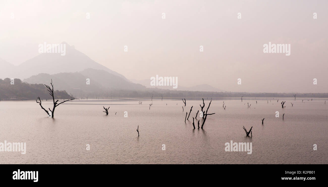 Dead trees in a lake, mountain in the background, soft light - Stock Image
