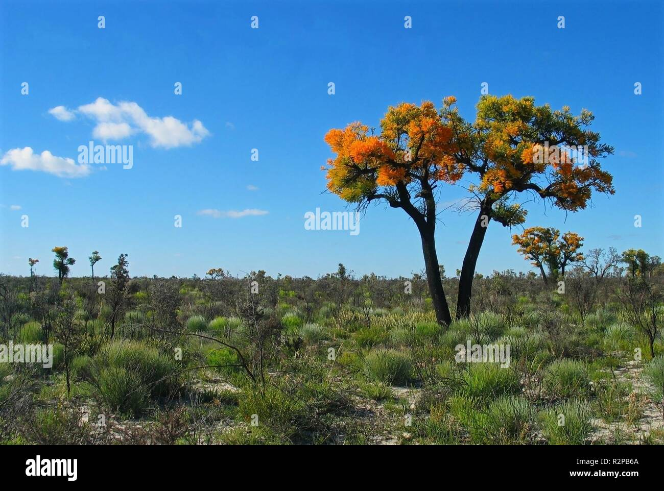shining tree - Stock Image