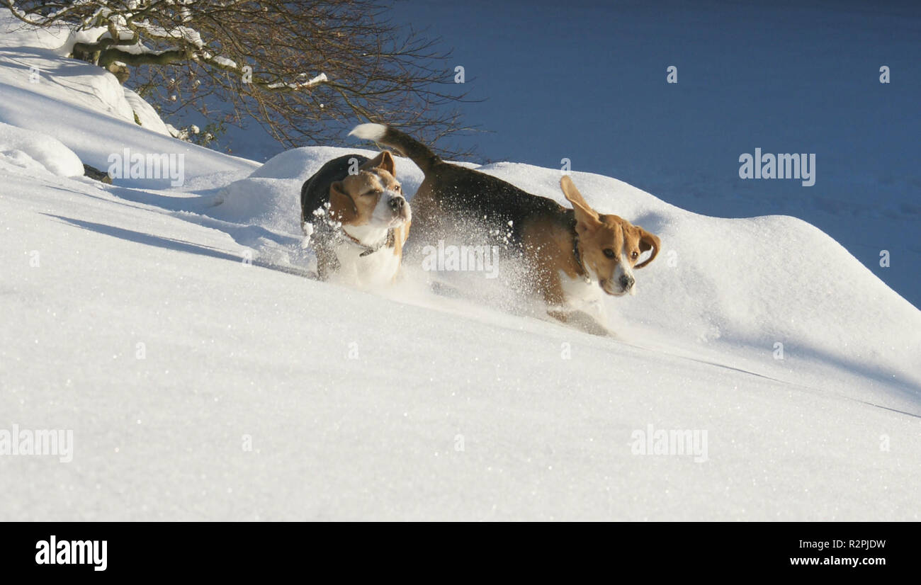 winterfreude Stock Photo