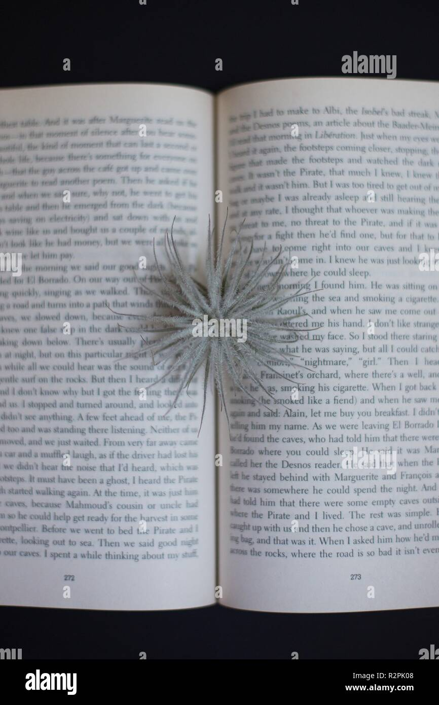 A book with a plant coming from its pages. Stock Photo