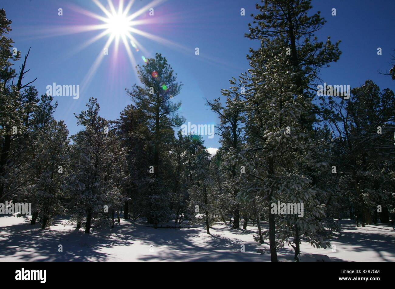 Landscape orientation of winter scene with coniferous pines and snow with sun burst in Grand Canyon National Park, Arizona - Stock Image