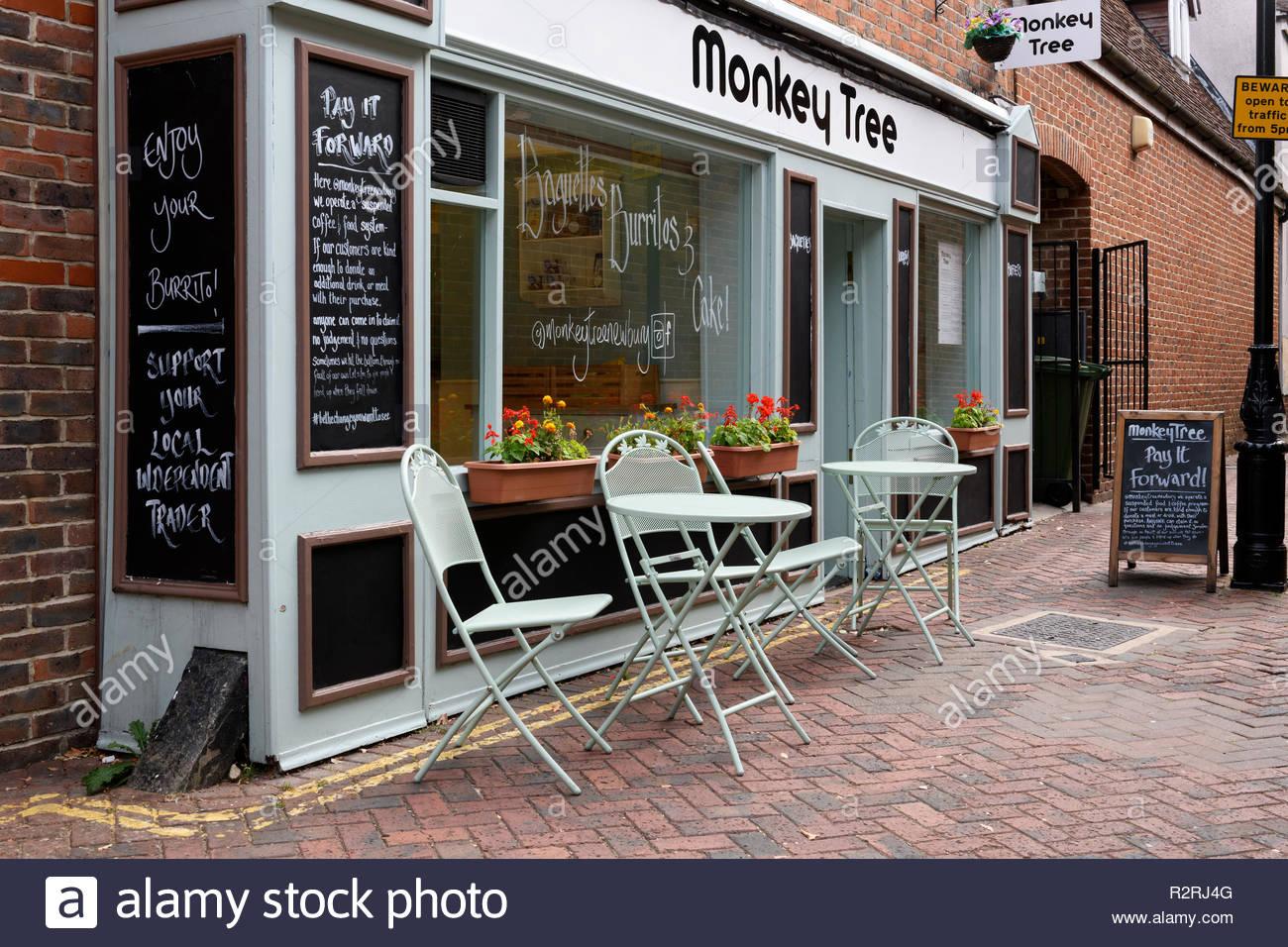 Monkey Tree cafe, Northcroft Lane, Newbury, Berkshire, England, UK - Stock Image