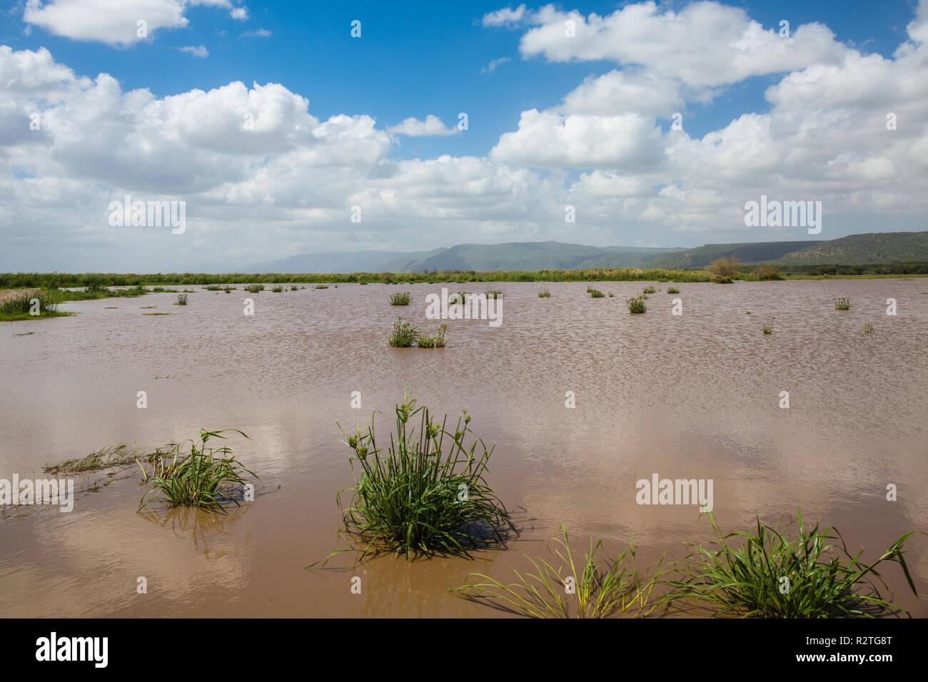 Lake in Lake Manyara, Tanzania - Stock Image