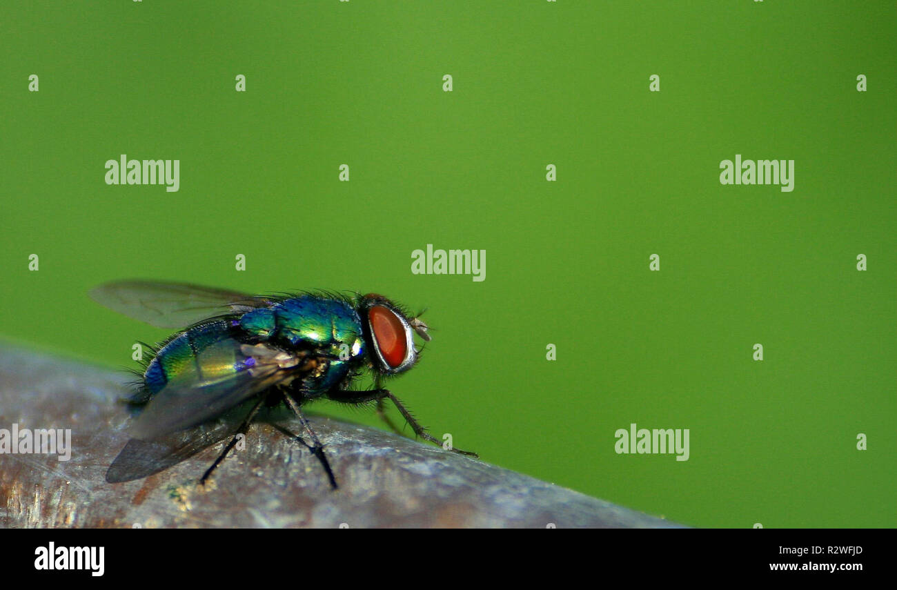 fly - Stock Image