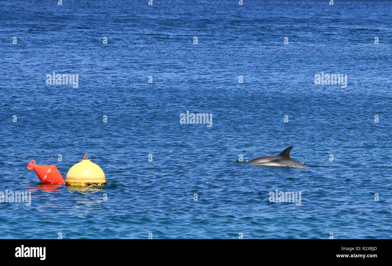 dolphin - Stock Image