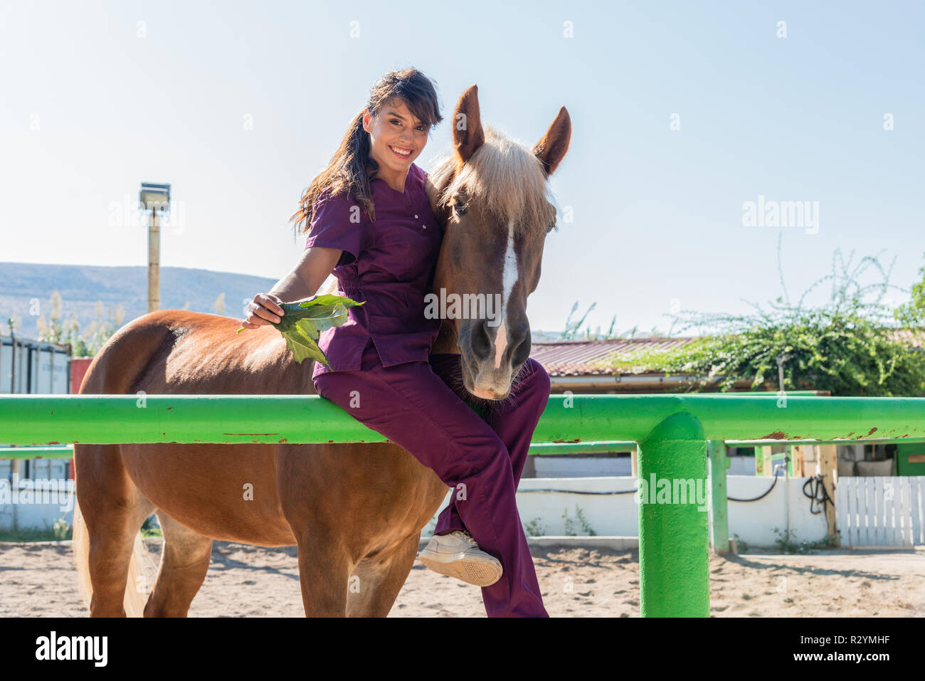 Young woman  veterinarian doctor feeding a brown horse outdoor. Equestrian healthcare medical concept. - Stock Image