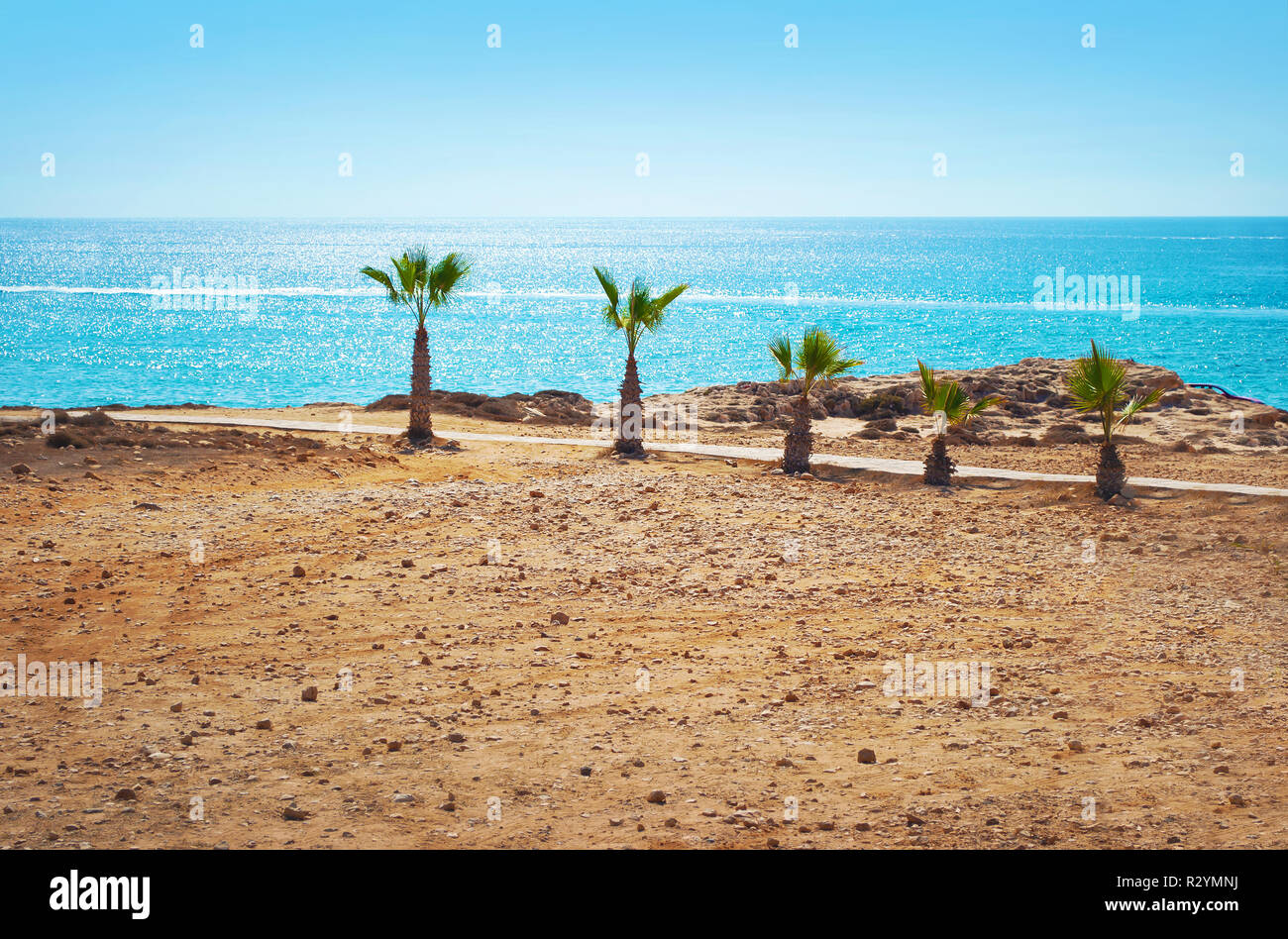 Image of five short palm trees on the barren beach on the background of sparkly blue sea surface and cloudless summer sky. - Stock Image