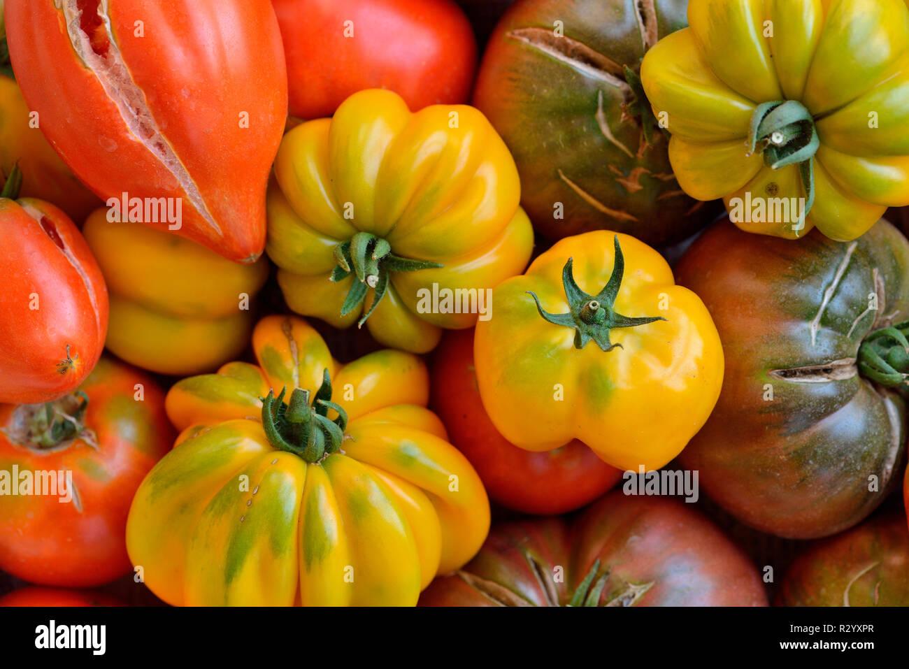 Different varieties of organic tomatoes (Solanum lycopersicum), Herault, France - Stock Image