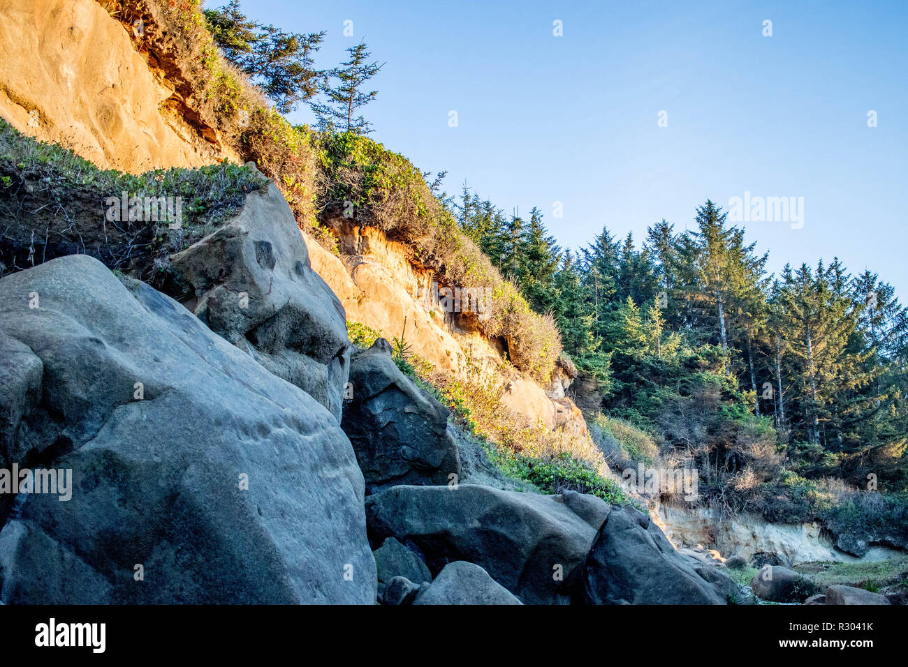 A dense conifer forest overlooks a rocky beach at sunset near Coos Bay, Oregon. - Stock Image