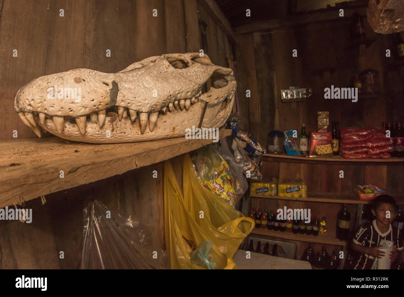 The skull of a huge black caiman (Melanosuchus niger) is on display at a small store in Amazonian Colombia. Stock Photo