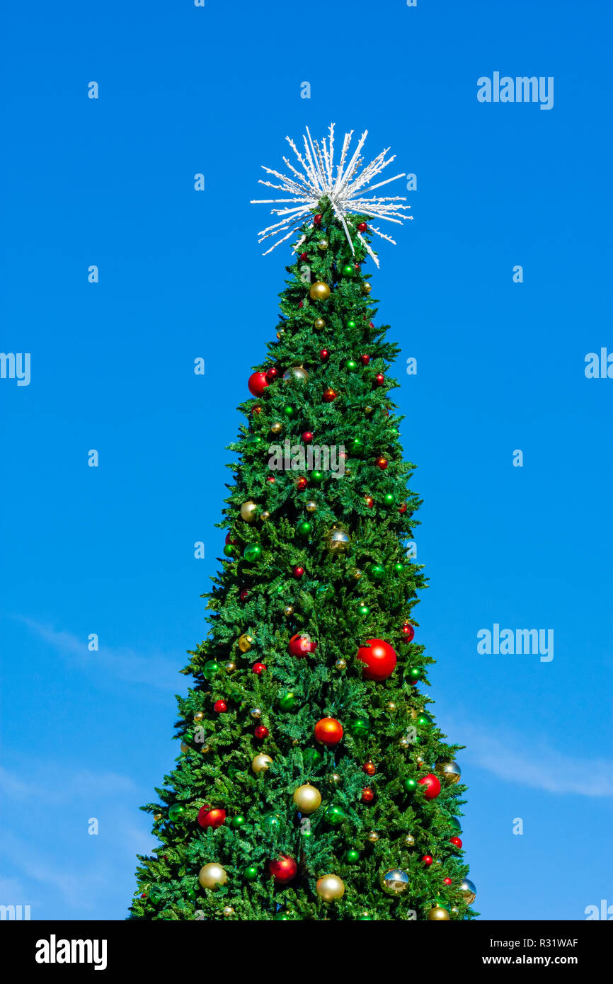 Large tall outdoor Christmas Tree in Festival Park, Castle Rock Colorado US. Photo taken in November. - Stock Image