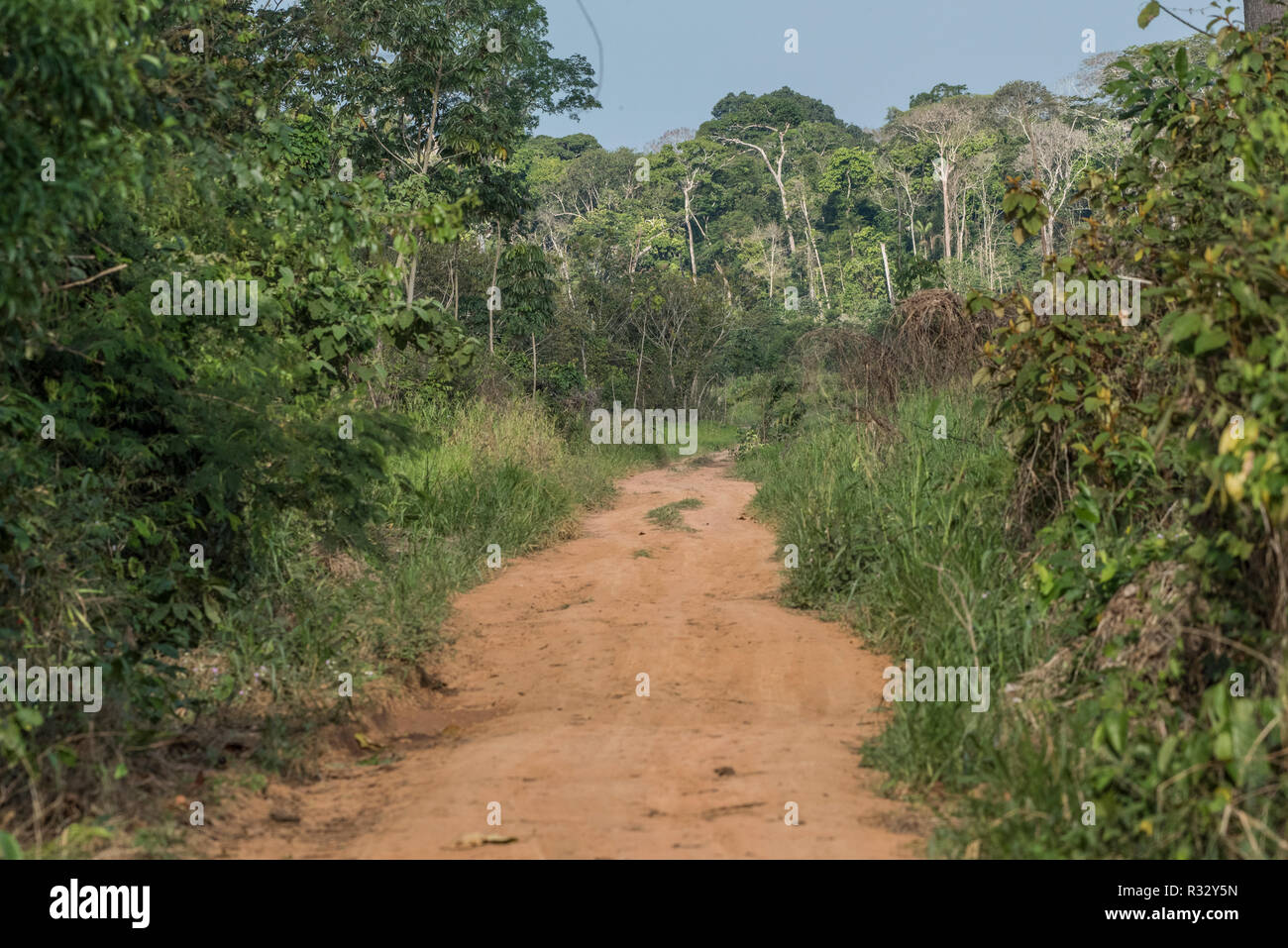 A road leading through secondary forest in Madre de Dios, Peru. - Stock Image