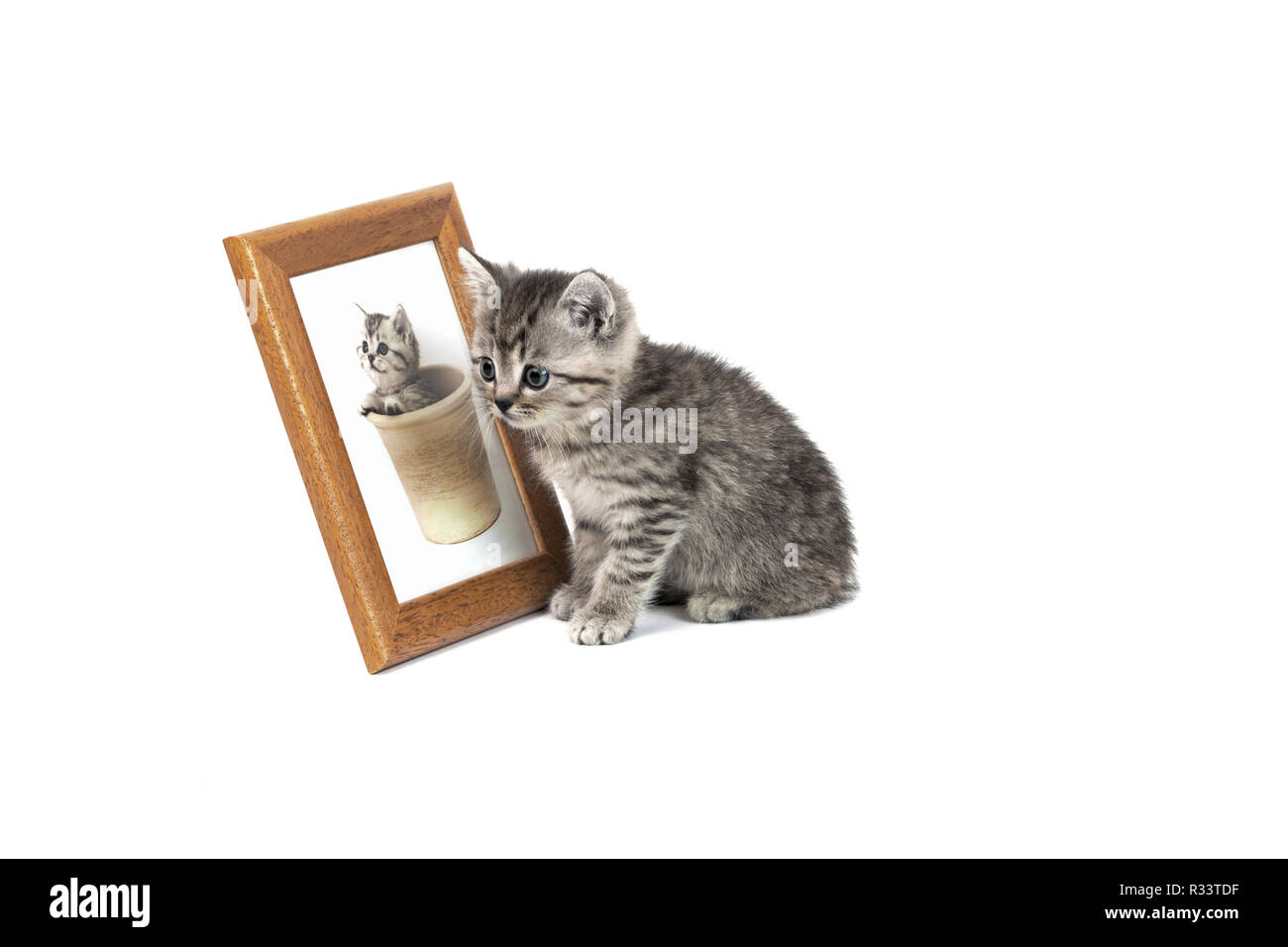 young cats Stock Photo
