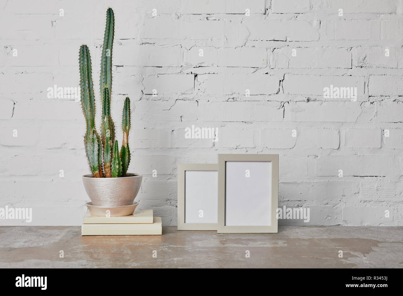 Cactus plant on books and photo frames on white brick wall background - Stock Image