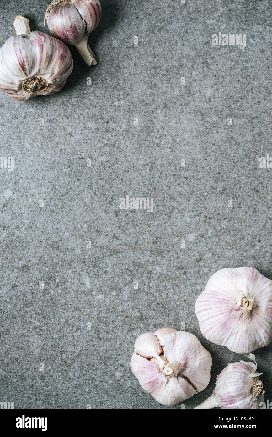 top view of several ripe garlic bulbs on grey background with copy space - Stock Image