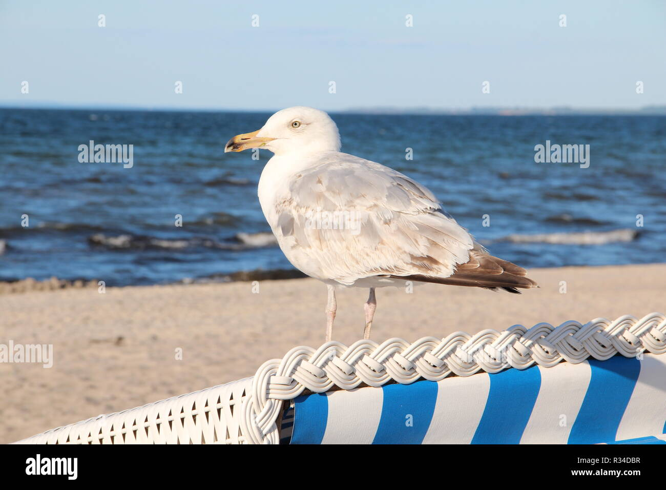 on the baltic sea beach - Stock Image