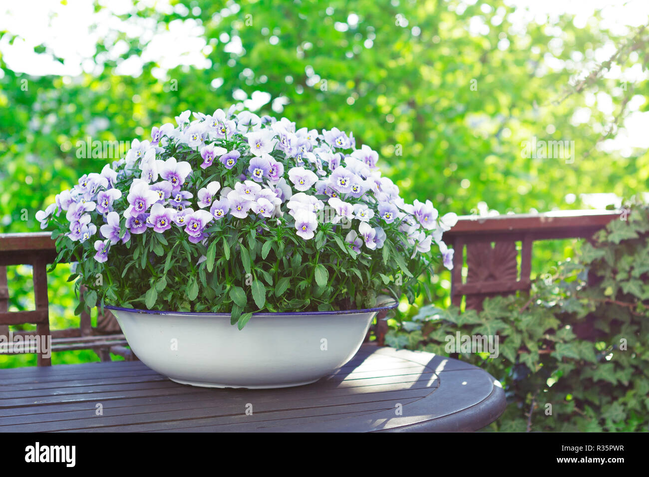 Pansy flowers in shades of lilac, violet and blue in a white vintage wash basin on a balcony table in bright sunlight, copy or text space Stock Photo