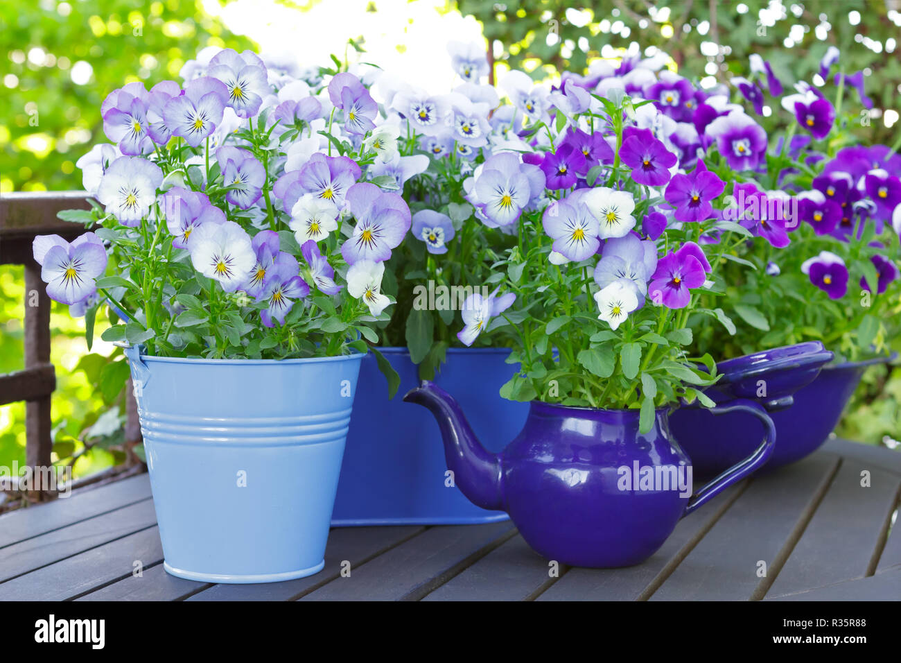 Purple, blue and violet pansy flowers in 3 pots and an enameled jug on a wooden balcony table in spring, background template Stock Photo