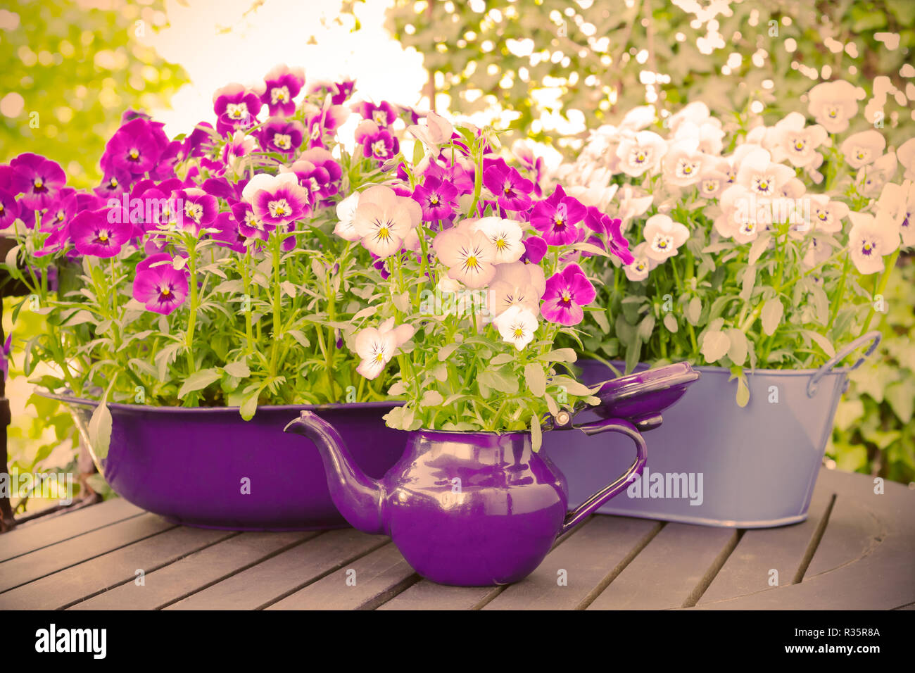 Purple, blue and violet pansy flowers in two pots and an enameled jug on a wooden balcony table in spring, vintage filter effect Stock Photo